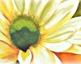 élixirs floraux de Flora