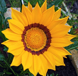 meditation-fleur